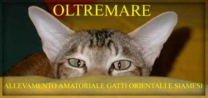 Oltremare Cattery